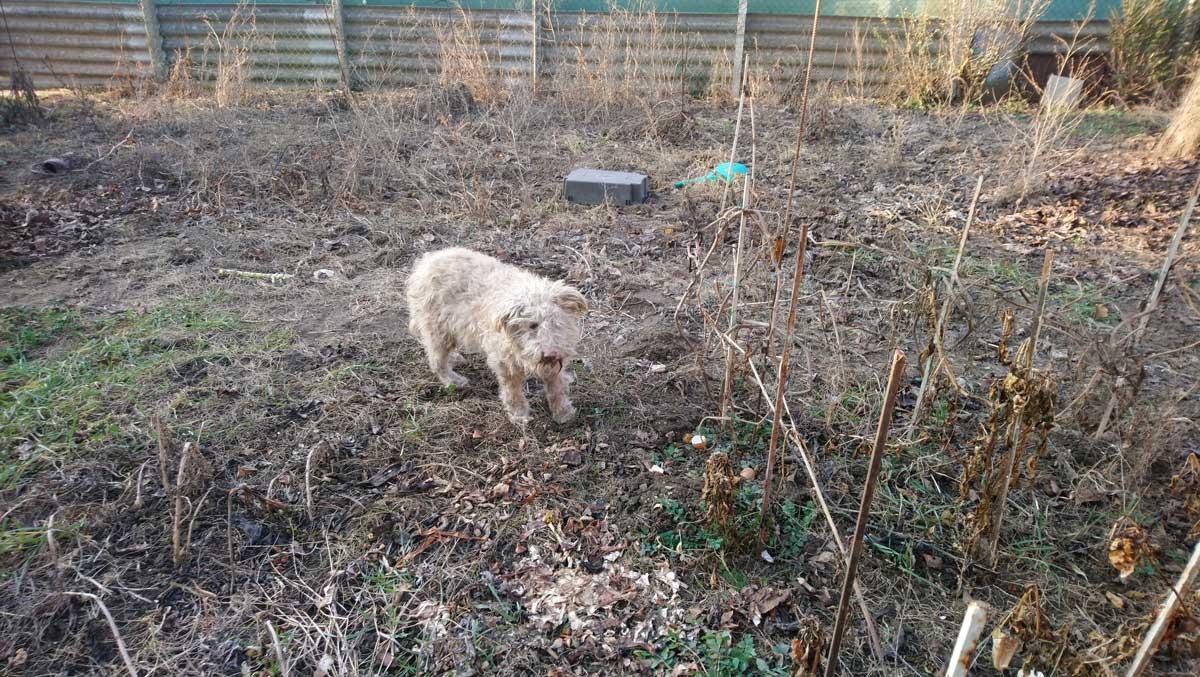 Bundi éppen ismerkedik a még rendbe nem rakott kerttel.