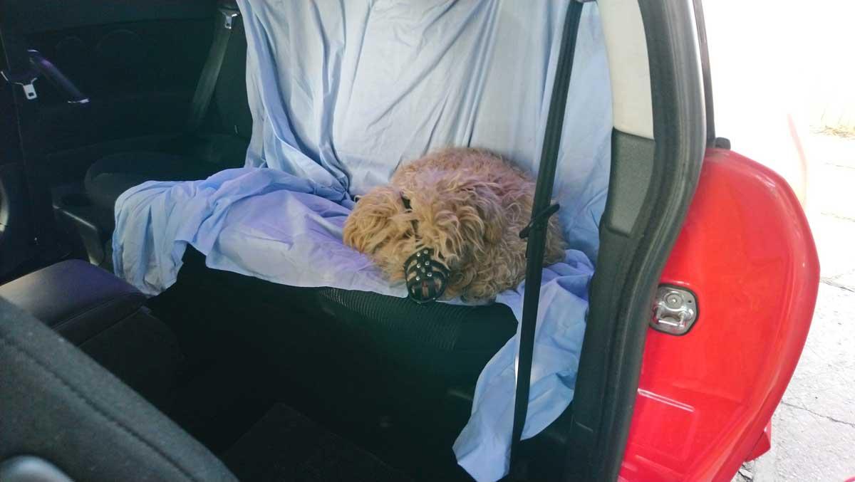 A kutya nem mert kijönni a kocsiból, amikor hazaérkeztünk.