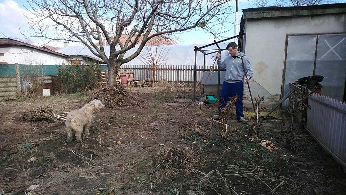 A kert takarítás kezdetén éppen a paradicsomok tartó rudakat szedtem ki, amiben Bundi asszisztált. Kertészkedésre fel