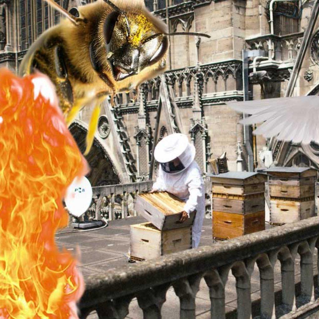 Méhek és madárcsaládok pusztultak el Notre-Dameban