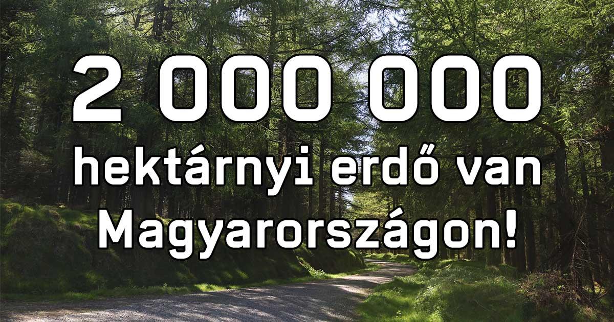 A faültetés az új zöld trend Magyarországon? 1