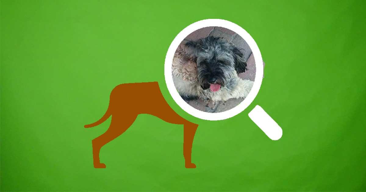 Kóbor kutya esete: Maya megmenekült