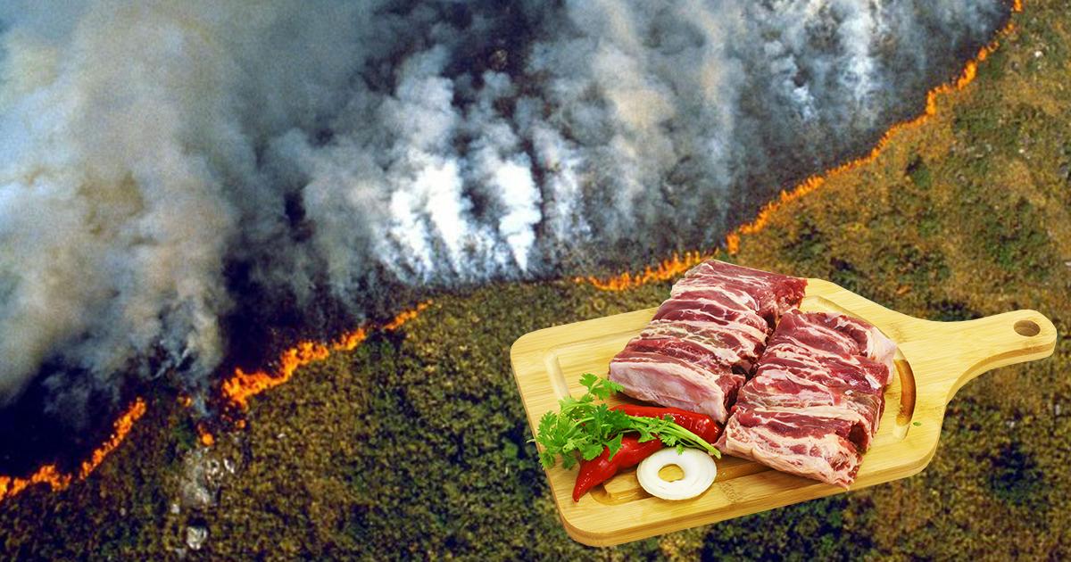 A marhahús fogyasztás az oka az Amazonas pusztításának 2