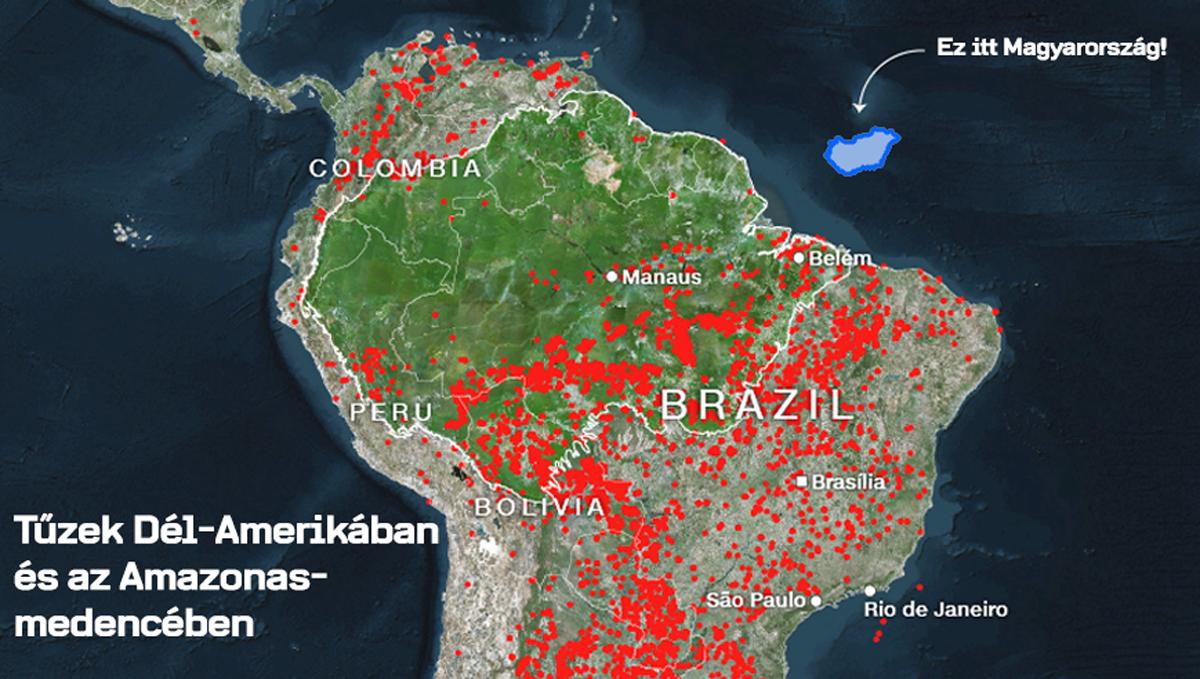 A marhahús fogyasztás az oka az Amazonas pusztításának 1