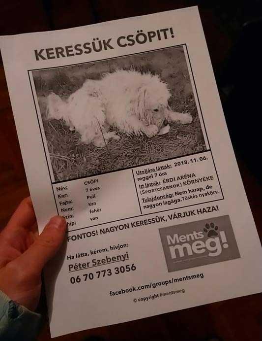 Kóbor kutya szerencsés esete: Maya megmenekült 1