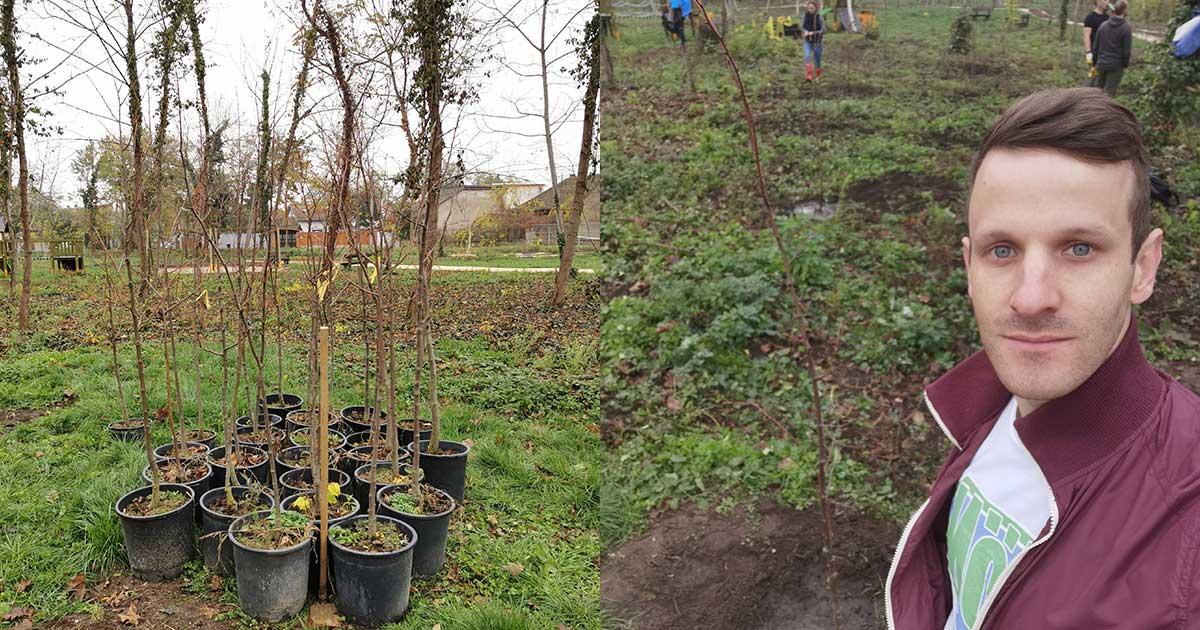 A faültetés szabályai segítségével 2019 novemberben a Pilisi Parkerdő Zrt. által kezelt területen ültettünk el 45 fát.