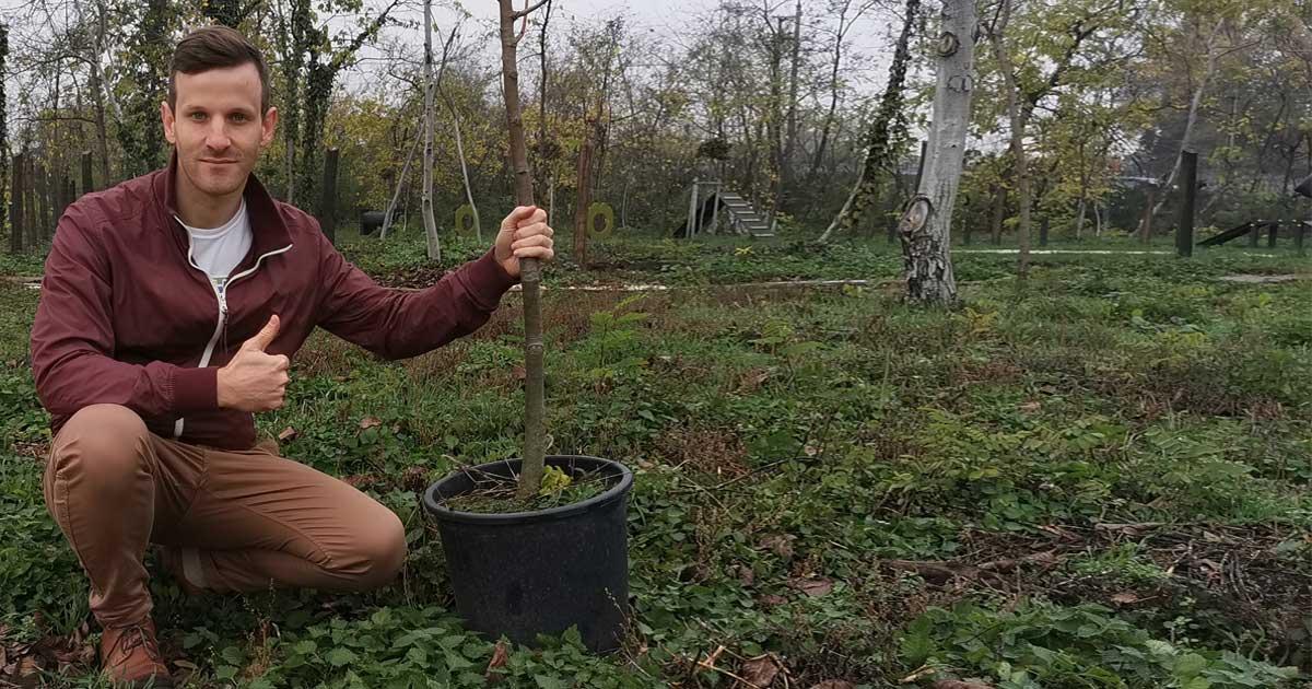 Novemberben a Pilisi Parkerdő Zrt. által kezelt területen ültettünk el 45 fát.