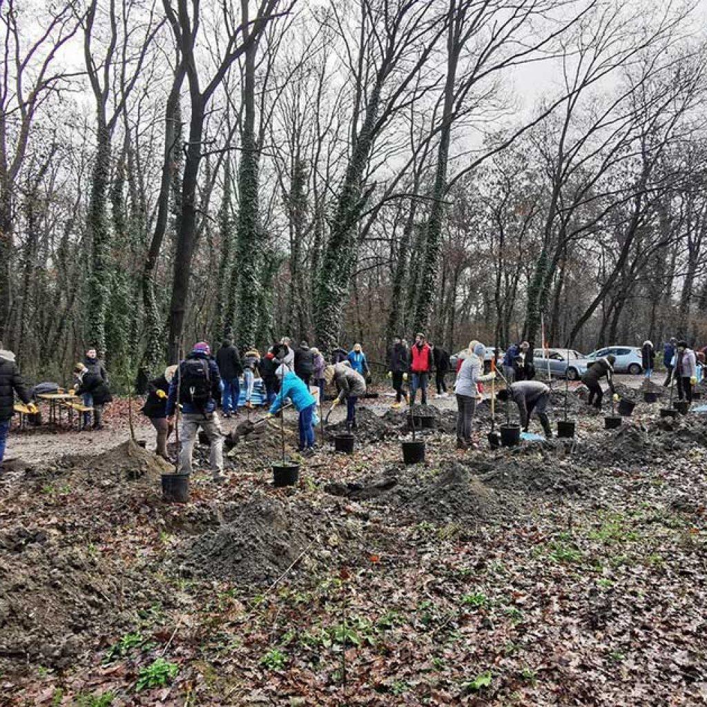Faültetés menő: több ezer fát ültettünk!