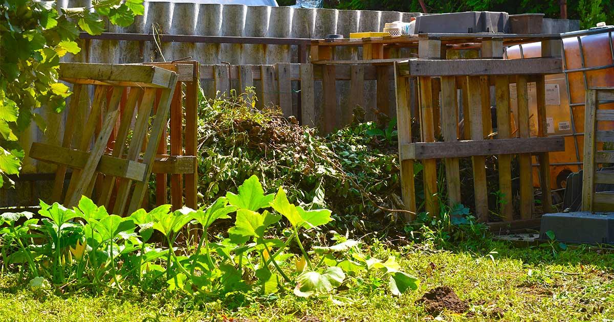 A raklapból saját magam által épített komposztáló láda a kertem egyik központja.