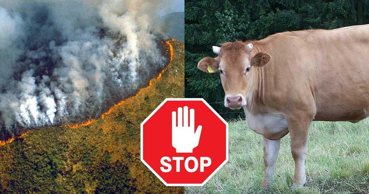 A marhahús fogyasztás az oka az Amazonas pusztításának