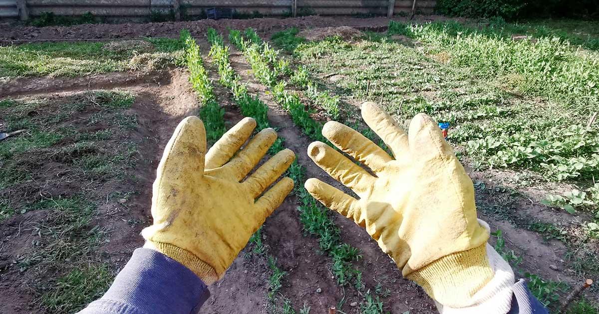 Kertészkesztyű, szerintem az egyik leghasznosabb eszköz a kertünkben.