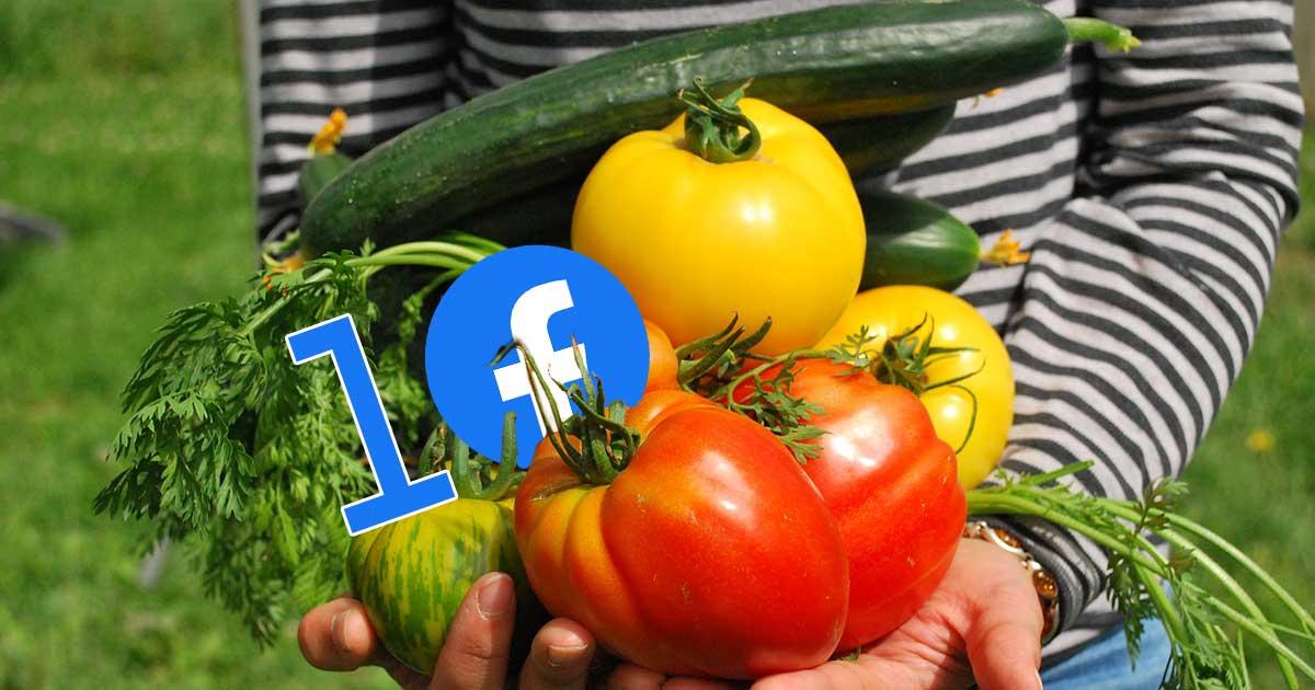 Inspiráló kerti ötletek 10 facebookos csoportban 1