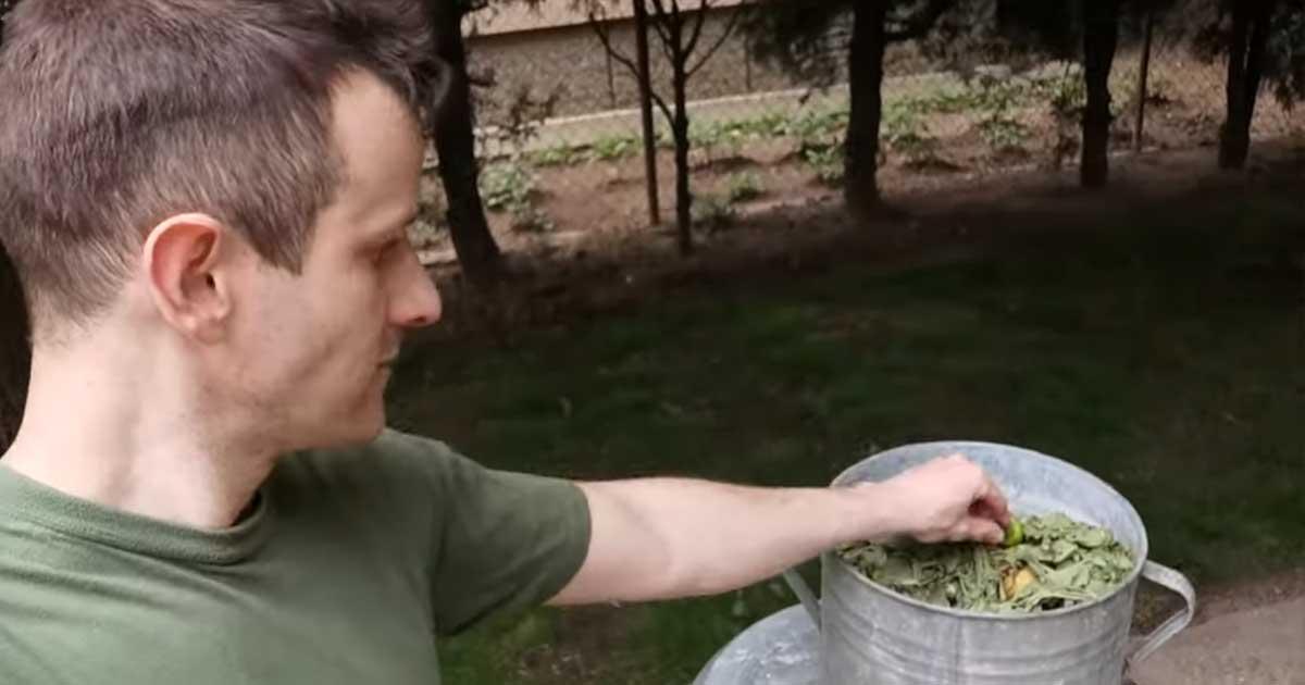 Magvetés speciálisan konyhai zöldhulladék felhasználásával.