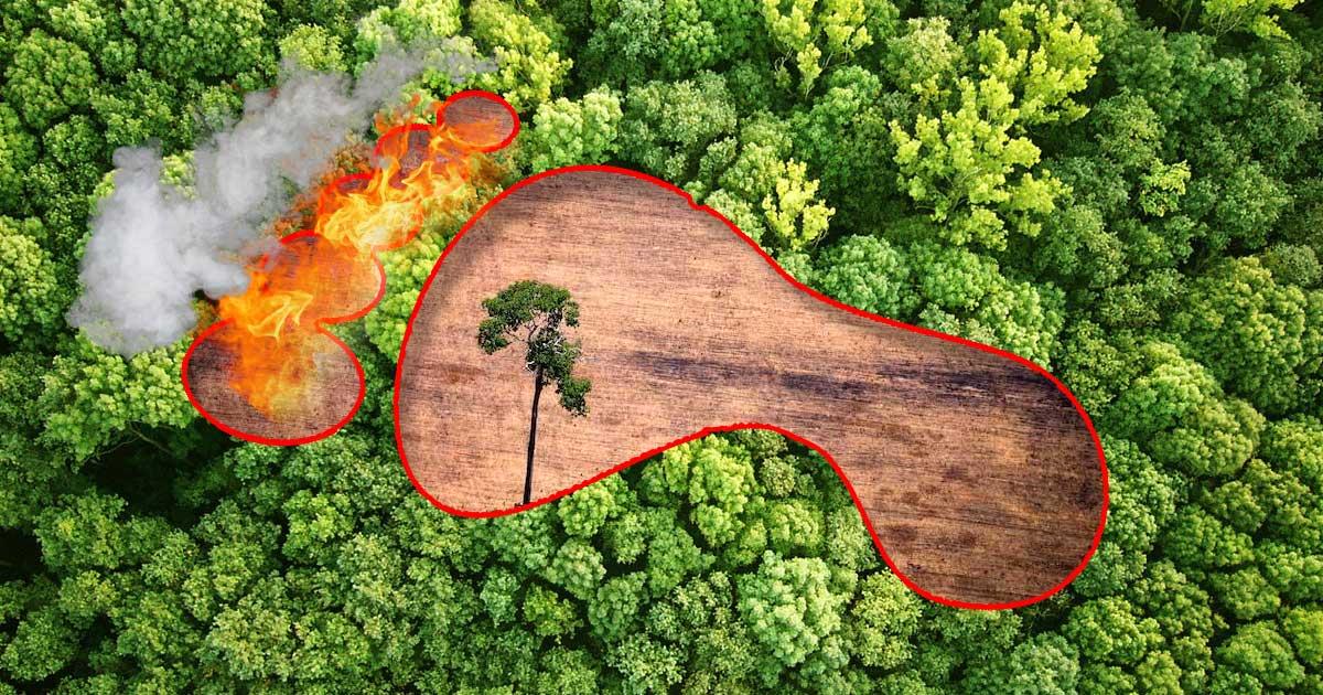 Ökológiai lábnyom fogalma
