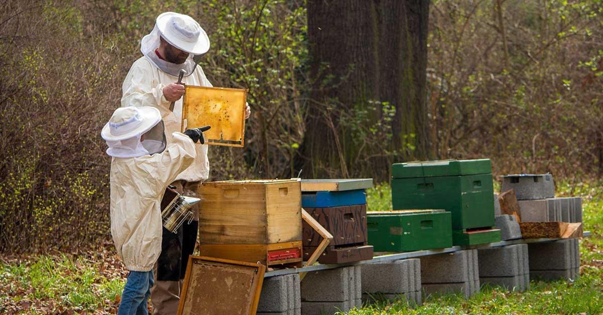 méhészet szakma
